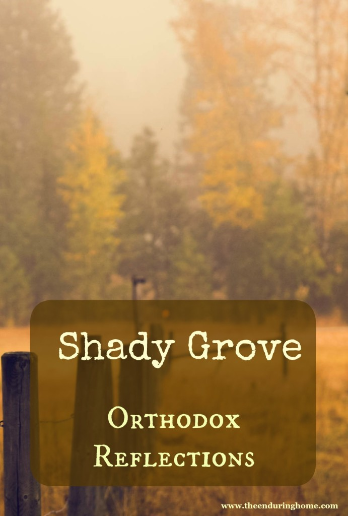 Shady Grove – Orthodox Reflections